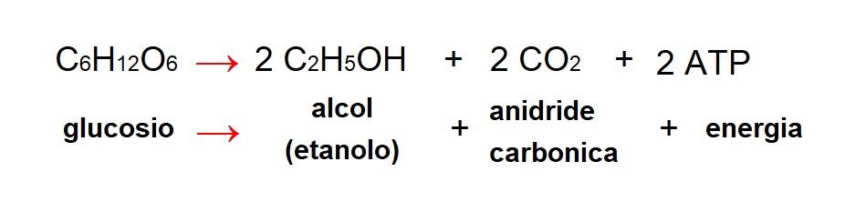 Fermentazione Alcolica - Lievito