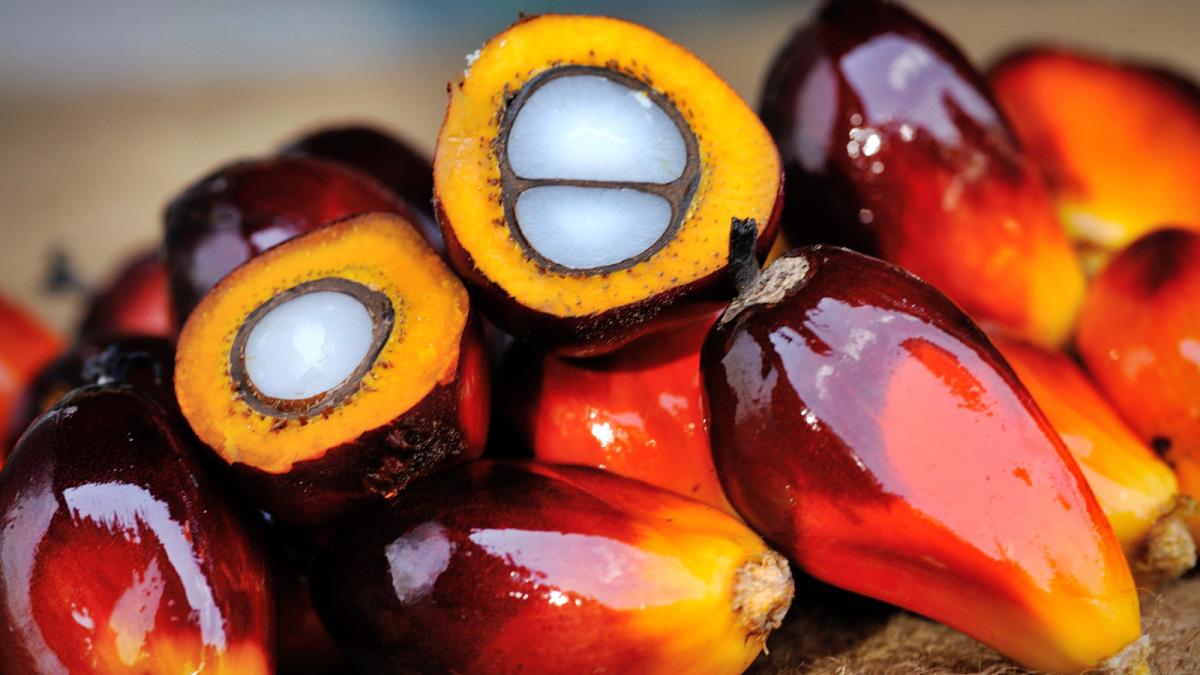 Frutti - Olio di Palma