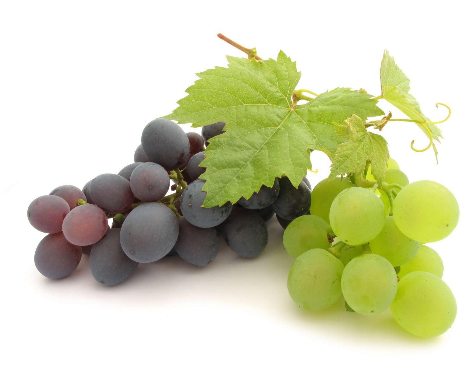 Uva Olio di Vinacciolo